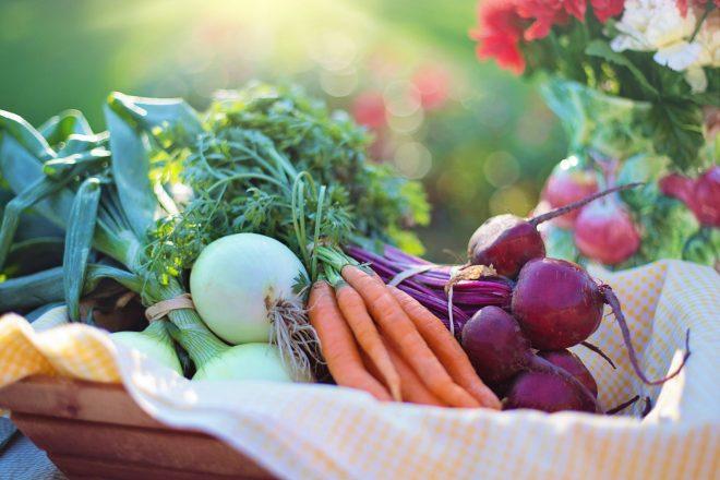 Transmettre le goût de l'agriculture urbaine