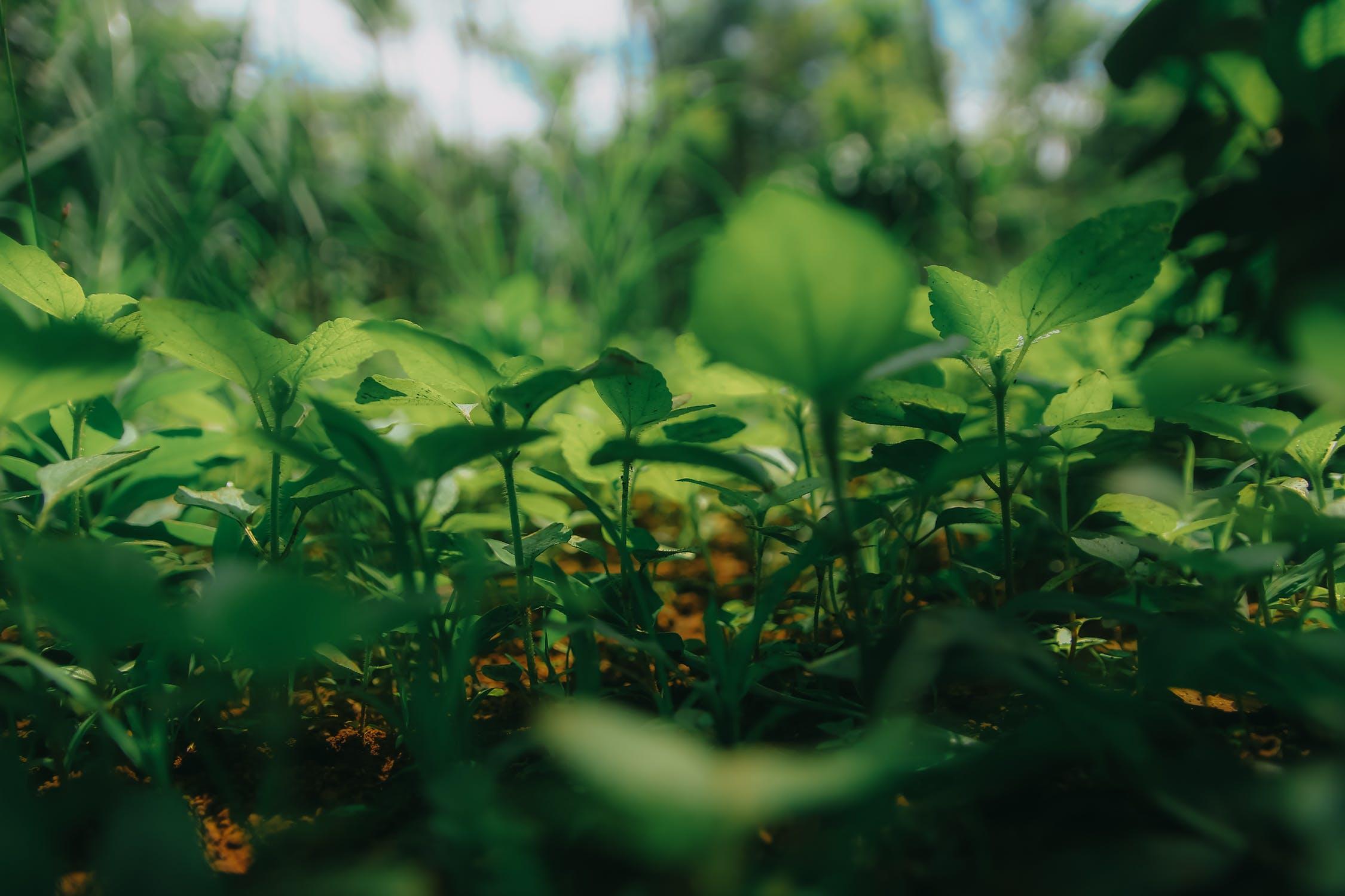 Des potagers dans la ville : l'agriculture urbaine